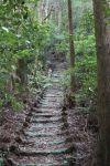 10 階梯路繼續中