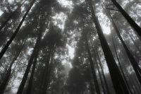 12 美麗的山林