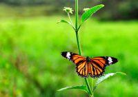 24豐富的生態景觀